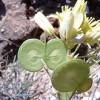 Natural Park Flora