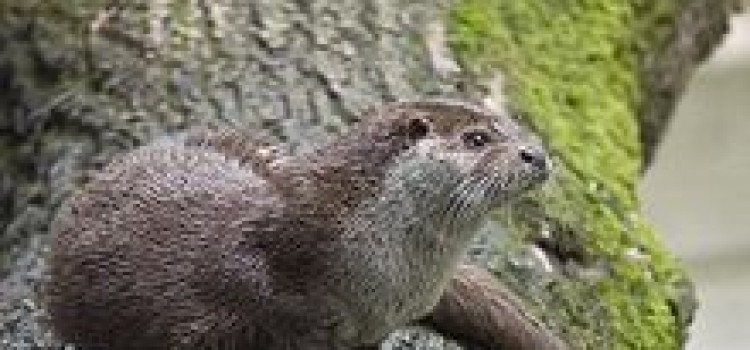 Natural Park Fauna, Birds, Mamals, Amphibians, Reptiles, Fish