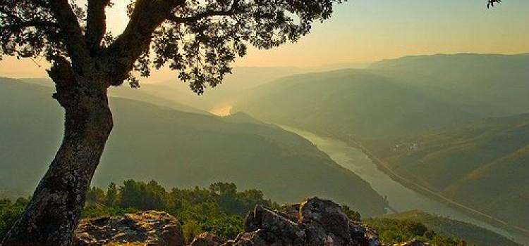 S. Leonardo da Galafura Viewpoint in Douro Valley